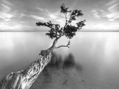 Water Tree XIII