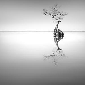 Zen Tree by Moises Levy