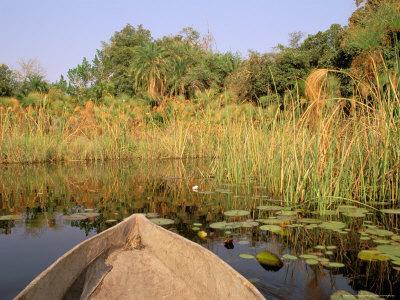 https://imgc.allpostersimages.com/img/posters/mokoro-through-reeds-and-papyrus-okavango-delta-botswana_u-L-P580LO0.jpg?p=0