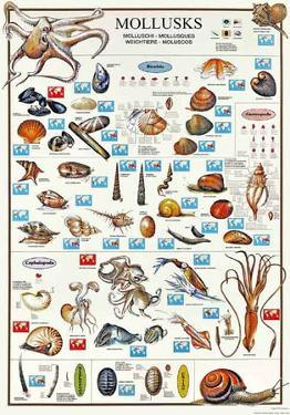 Mollusks Breeds Of The World (Italian)
