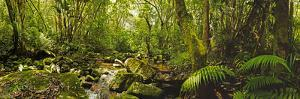 Molweni river flowing in a forest, Krantzkloof Nature Reserve, KwaZulu-Natal, South Africa