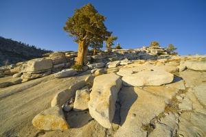 Alpine Wilderness with Exposed Granite Slabs, Boulders, and Juniper Trees, Yosemite National Park, by Momatiuk - Eastcott