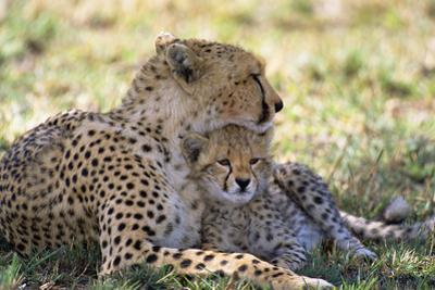 Cheetah Mother and Cub Resting in Shade Together by Momatiuk - Eastcott