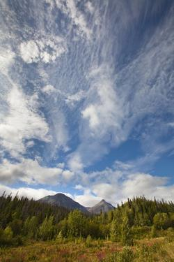 Cumulus Clouds and Forest in Yukon by Momatiuk - Eastcott