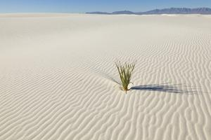 Dune and Yucca Plant in White Sands National Monument by Momatiuk - Eastcott