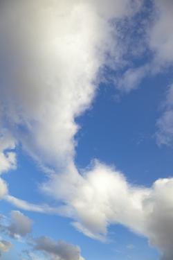 Lenticular and Cumulus Clouds in Denali National Park by Momatiuk - Eastcott