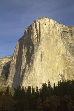 Majestic Sheer Rocky Wall of El Capitan, Yosemite National Park, California by Momatiuk - Eastcott