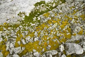 Moss and Lichens Growing on Rocks by Momatiuk - Eastcott
