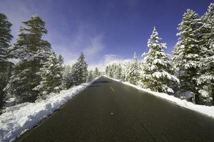 Mountain Highway among Snowy Trees in Inyo National Forest by Momatiuk - Eastcott