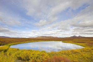 Pond and Tundra in Yukon Territory by Momatiuk - Eastcott