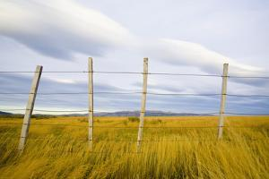 Wire Fence on Ranch by Momatiuk - Eastcott