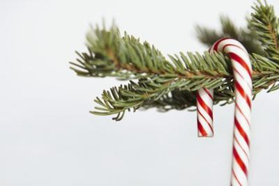 Candy Cane Hanging on Christmas Tree Branch