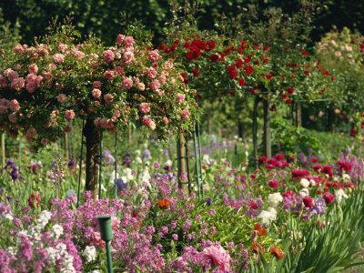 https://imgc.allpostersimages.com/img/posters/monet-s-garden-giverny-haute-normandie-france-europe_u-L-P7NHSW0.jpg?p=0