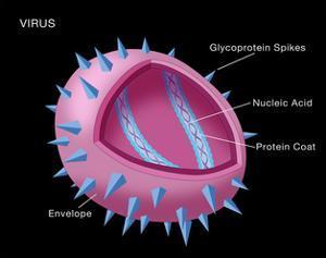 Virus Diagram by Monica Schroeder