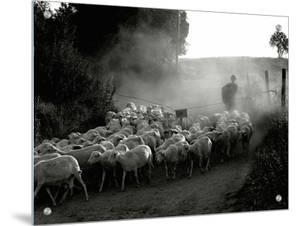 The Shepherd by Monika Brand