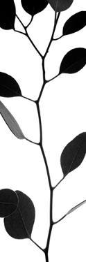 Lunaria Honesty I by Monika Burkhart