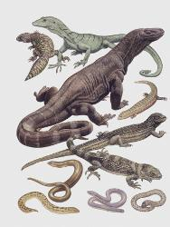Affordable Monitor Lizards Posters for sale at AllPosters com