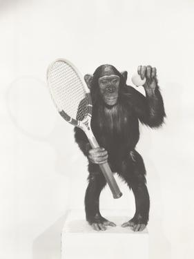 Monkey Holding a Tennis Racket and Ball