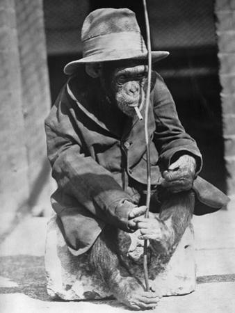 Monkey Wearing Jacket Smoking Cigarette