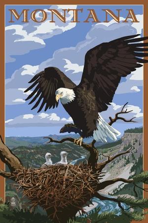 https://imgc.allpostersimages.com/img/posters/montana-eagle-perched_u-L-Q1GQTB80.jpg?p=0