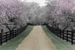 Apple Blossom Lane by Monte Nagler
