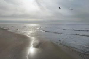 Beach Flight by Monte Nagler