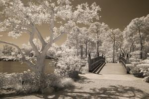 Bridge & Trees At Japanese Gardens, Delray Beach, Florida '10 by Monte Nagler
