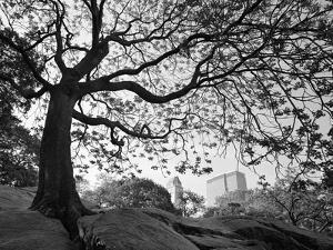 Central Park #1, New York, New York 05 by Monte Nagler