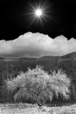 Cottonwood & Sunbeams, Canyon de Chelly, Arizona 10 by Monte Nagler