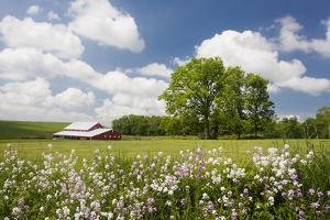 Flowers & Farm, Holmes County, Ohio '10 by Monte Nagler
