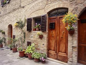 Flowers On The Wall, Tuscany, Italy by Monte Nagler