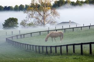 Horses in the Mist #3, Kentucky '08 by Monte Nagler