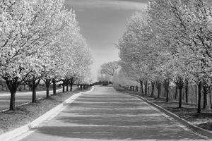 IMG_0007 - Row of Trees by Monte Nagler