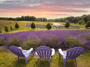 Lavender Chairs, Horton Bay, Michigan '14 by Monte Nagler