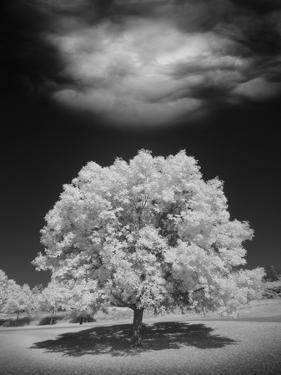 Lone Tree & Cloud, Green Bay, Wisconsin '12 by Monte Nagler