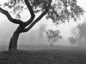 Morning Mist, Farmington Hills, Michigan 82 by Monte Nagler