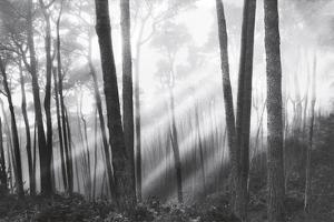 Mystical Forest & Sunbeams by Monte Nagler