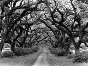 Path In The Oaks #2, Louisiana by Monte Nagler