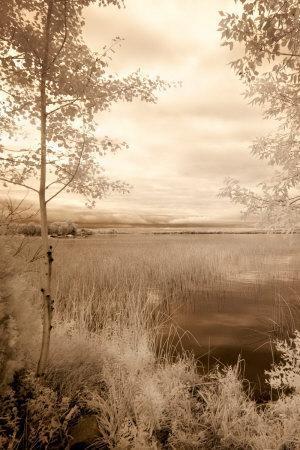 Peaceful Morning I