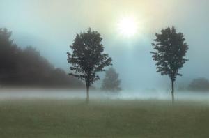 Sunburst by Monte Nagler