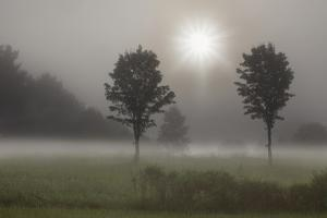 Two Trees & Sunburst, Logan, Ohio '10 by Monte Nagler