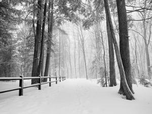 Winter's Path by Monte Nagler
