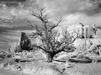 https://imgc.allpostersimages.com/img/posters/monument-valley-arizona_u-L-PWB3UN0.jpg?p=0
