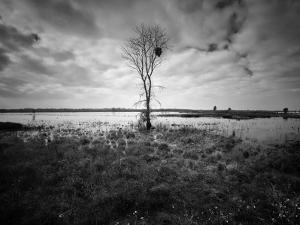 Moody Marsh Tree in Black and White, Central California