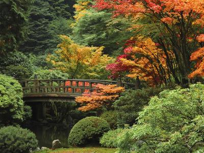 https://imgc.allpostersimages.com/img/posters/moon-bridge-in-autumn-portland-japanese-garden-portland-oregon-usa_u-L-PXQO0E0.jpg?p=0