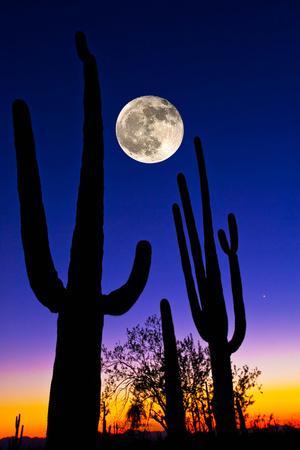 https://imgc.allpostersimages.com/img/posters/moon-over-saguaro-cactus-carnegiea-gigantea-tucson-pima-county-arizona-usa_u-L-PNULRK0.jpg?p=0