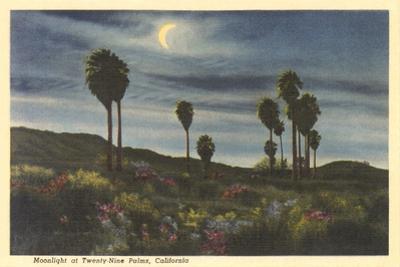 Moonlight at Twenty-Nine Palms