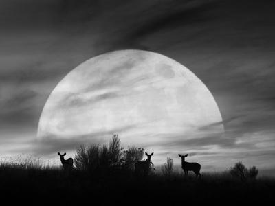 https://imgc.allpostersimages.com/img/posters/moonlight-silhouette-farmington-hills-michigan-12_u-L-Q1AHMQA0.jpg?p=0