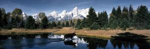 Moose and Beaver Pond Grand Teton National Park WY USA