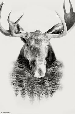 Moose - Trees